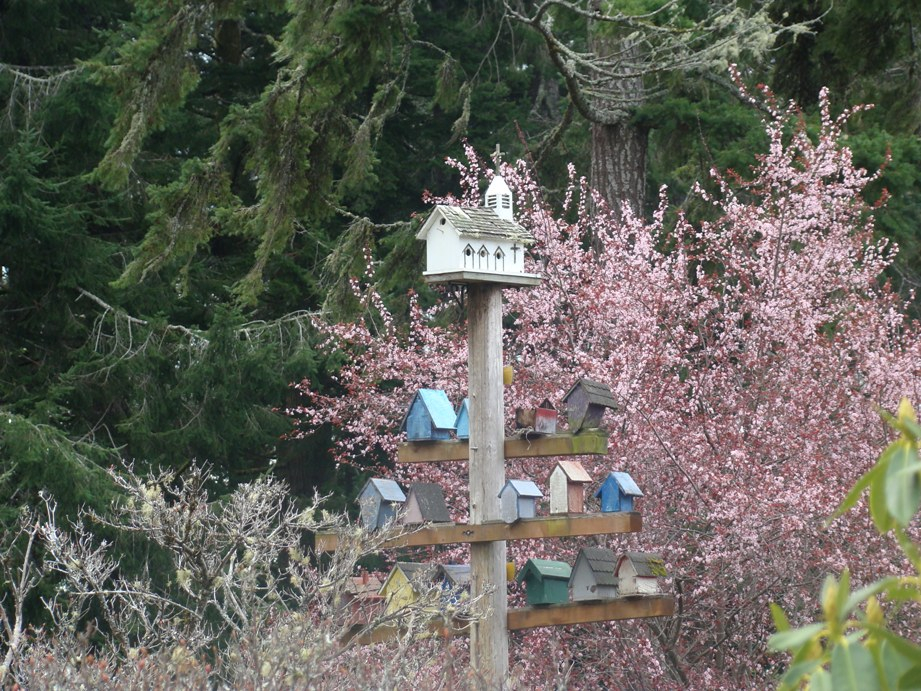 Photo of birdhouses at Azalea Park