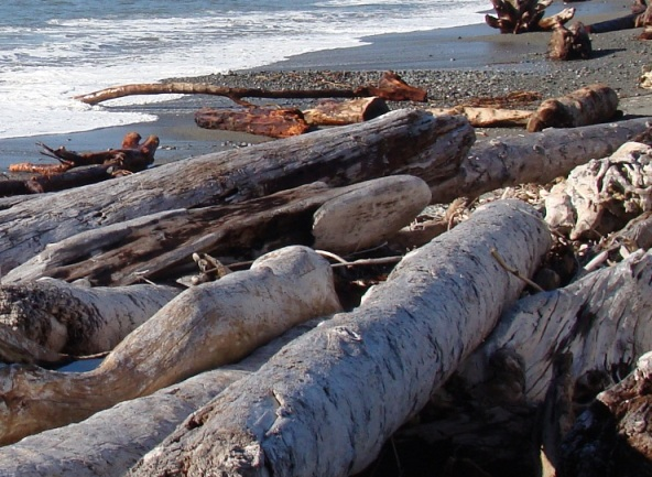 Photo of driftwood on the beach